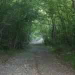 sentiero vicinanze M_Calvario06